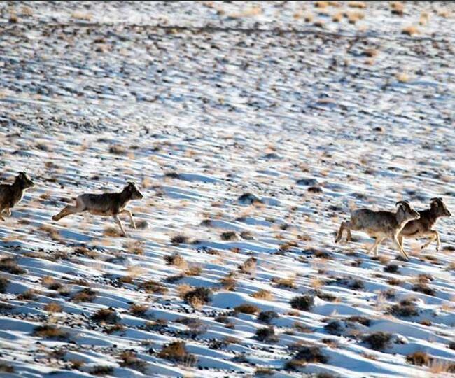 甘肃湿地成野生动物乐园