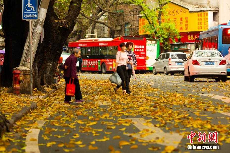 广州春雨后现秋色