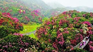 贵州今春推出41条赏花主题旅游路线