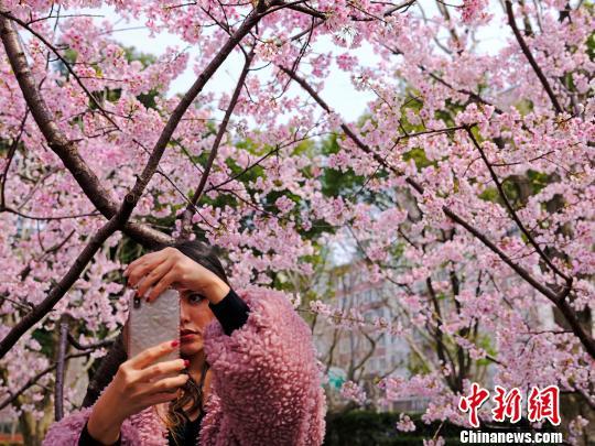 上海樱花大道吸引民众