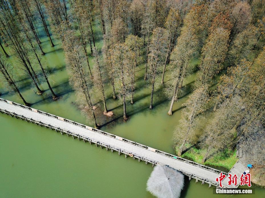上海郊野公园水上森林