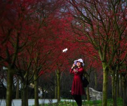 重庆春季红枫层林壮观