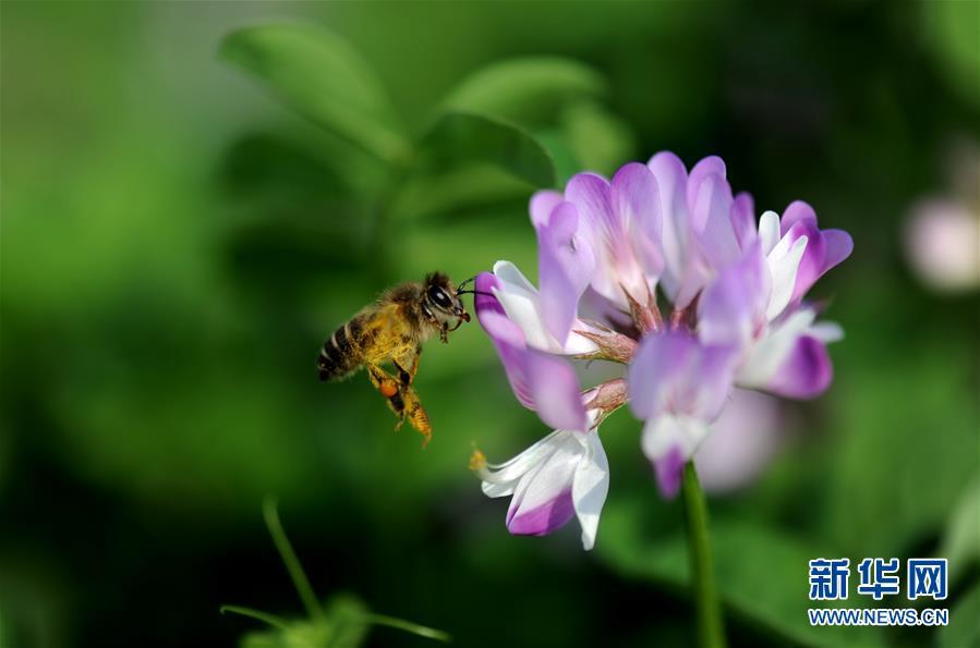 上海:千花百卉争明媚