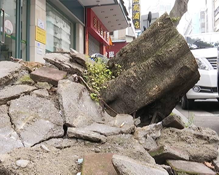 树根无人清理 影响市容市貌