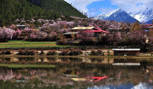 雅鲁藏布大峡谷的桃花开了