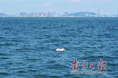 珠江口中华白海豚累计识别2381头
