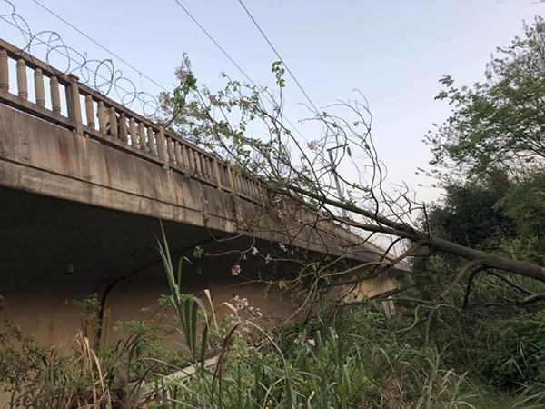 砍倒一棵树逼停28趟高铁