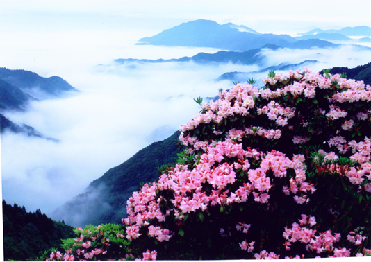 第22届天台山云锦杜鹃节将于4月27日开幕