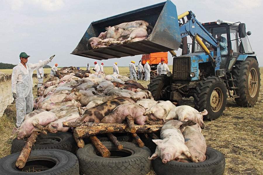 农业农村部:应对非洲猪瘟安排6.3亿元补助