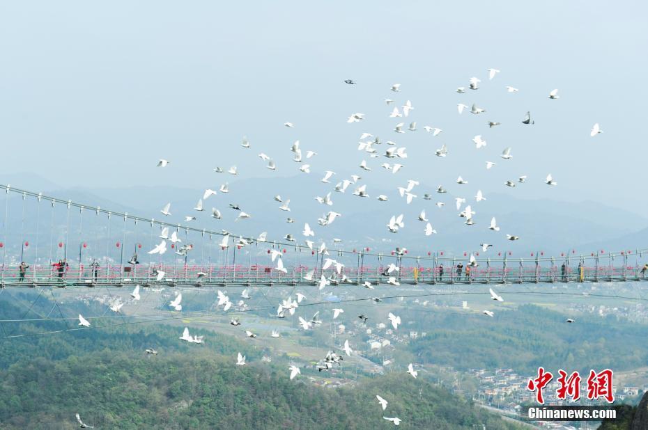 """安徽芜湖马仁奇峰景区""""百鸟飞跃玻璃桥"""""""