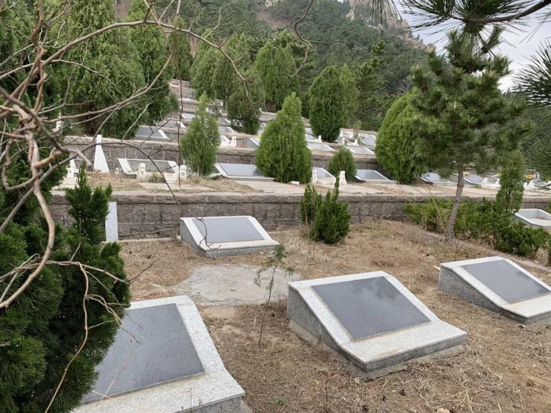 6万座坟!青岛崂山景区如何成了非法坟墓集中地?当地回应了