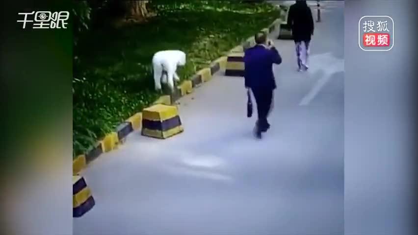 男子拍打宠物狗假装被咬索赔偿