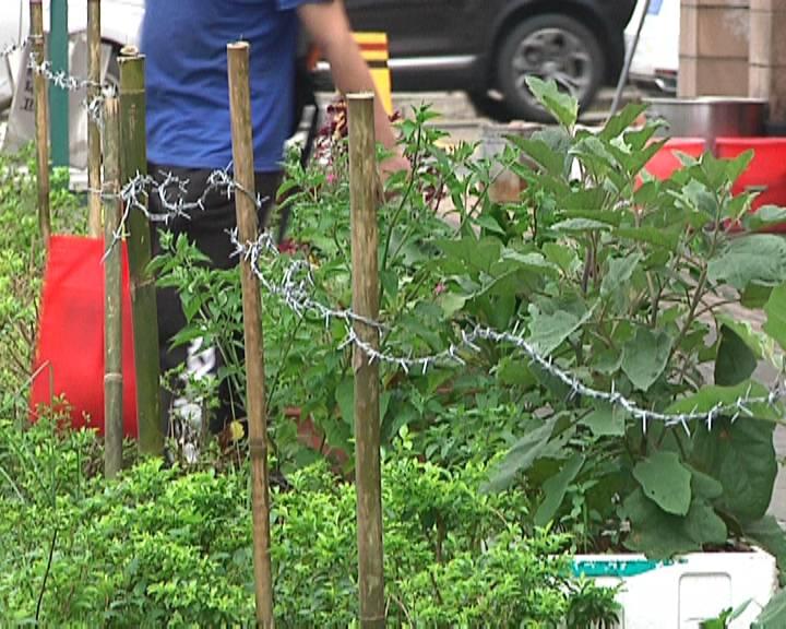 小区外绿化花圃被加装锋利铁丝 居民出入心惊惊