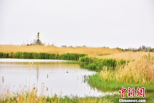 甘肃戈壁沙漠成绿洲