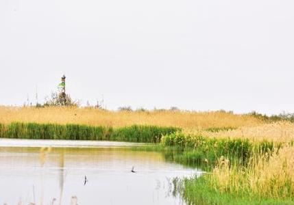 甘肃戈壁明花海子夏日草绿水美 沙漠成绿洲