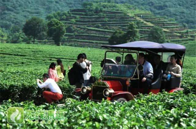 广东每年扶持1000个村发展农业特色产业