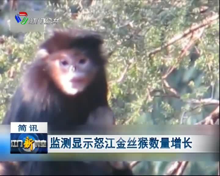 监测显示怒江金丝猴数量增长
