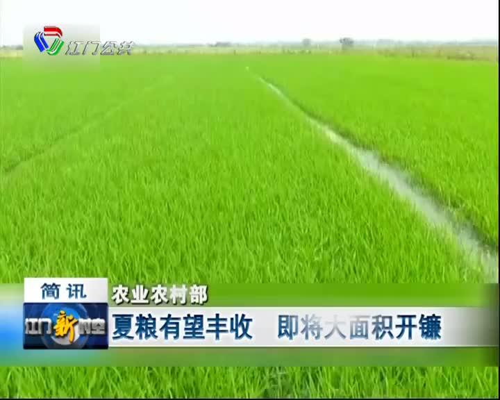 农业农村部:夏粮有望丰收,即将大面积开镰