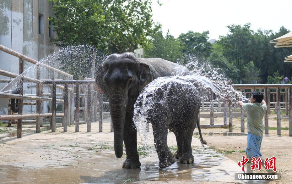 济南动物园动物享清凉