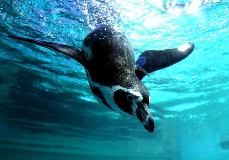 海洋動物萌態十足吸引游人