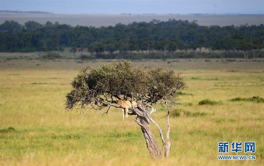 肯尼亞馬賽馬拉國家保護區掠影