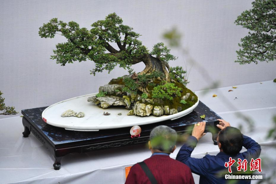昆明举办国际盆景展