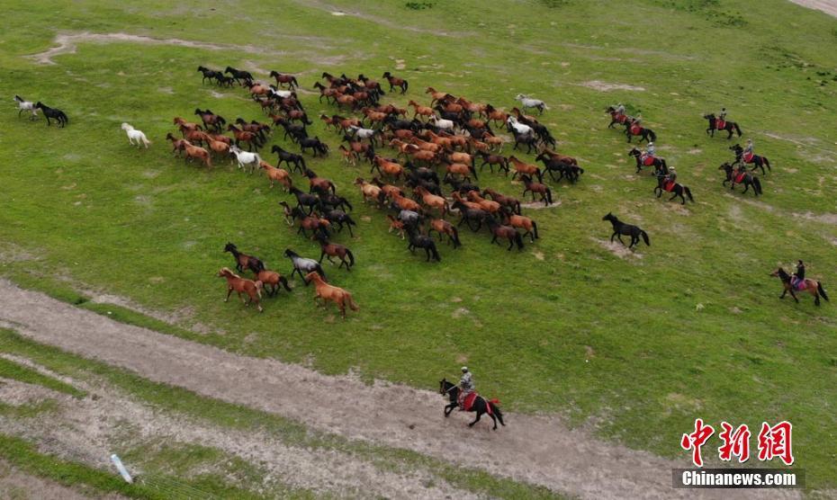 马匹成群奔跑在祁连山