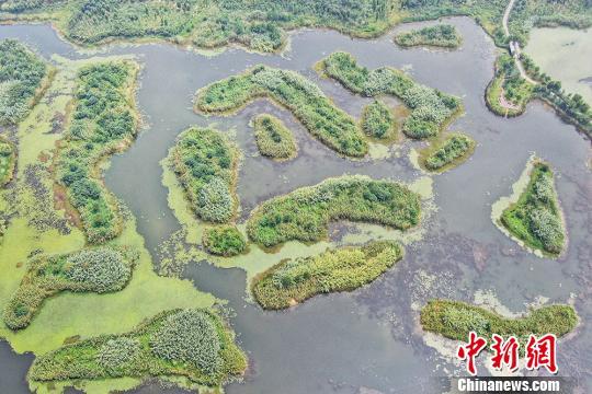 江蘇濕地公園夏日旖旎