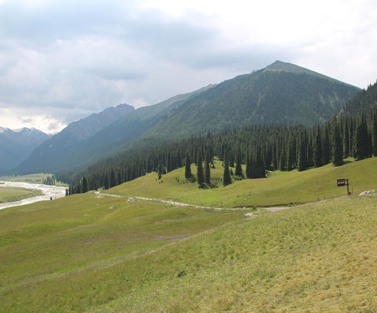 盛夏新疆草原草豐景美
