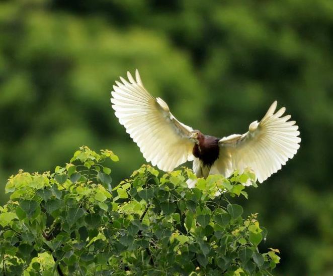 濕地山青水綠白鷺飛舞