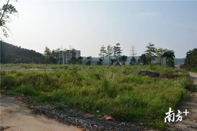 紫茶小學群福校區落戶杜阮 預計2021年9月前建成