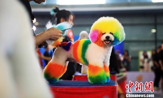 亚洲宠物展上海开幕