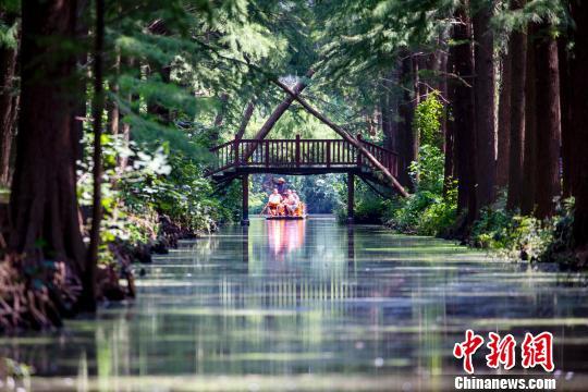 江蘇水上森林綠意盎然