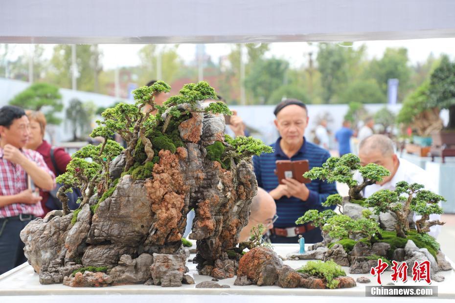 国际盆景赏石大会开幕
