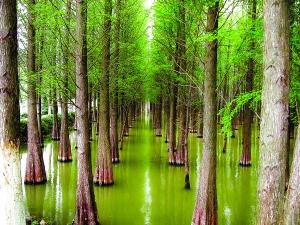 明年广东湿地公园将达280个 全省湿地保护率达52%