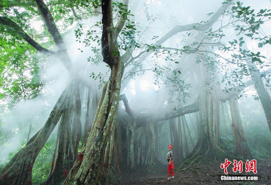 云南德宏亚热带雨林自然景观风景美如画