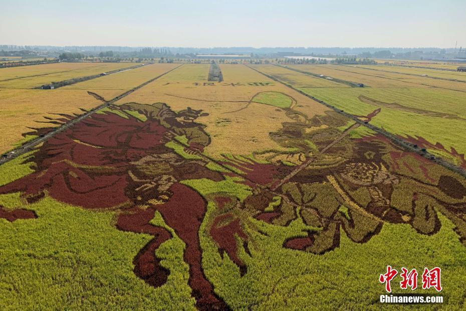 宁夏巨幅稻田画绘