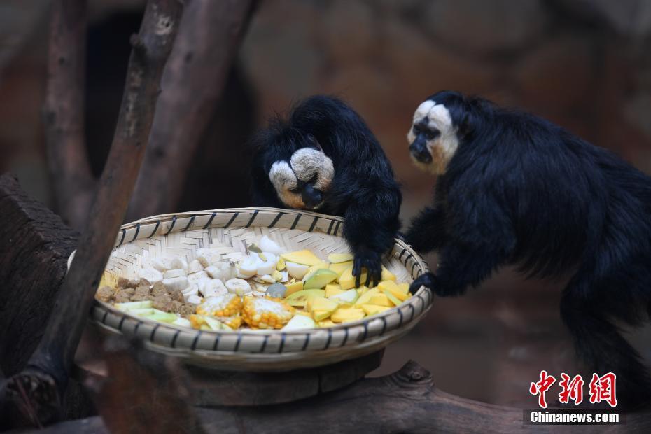 白面僧面猴与游客见面