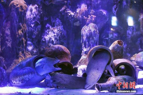 尼斯湖水怪之谜揭晓?科学家:可能是巨鳗(图)