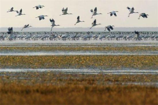 """江西:2700万元湿地生态补偿款 为候鸟""""保驾护航"""""""
