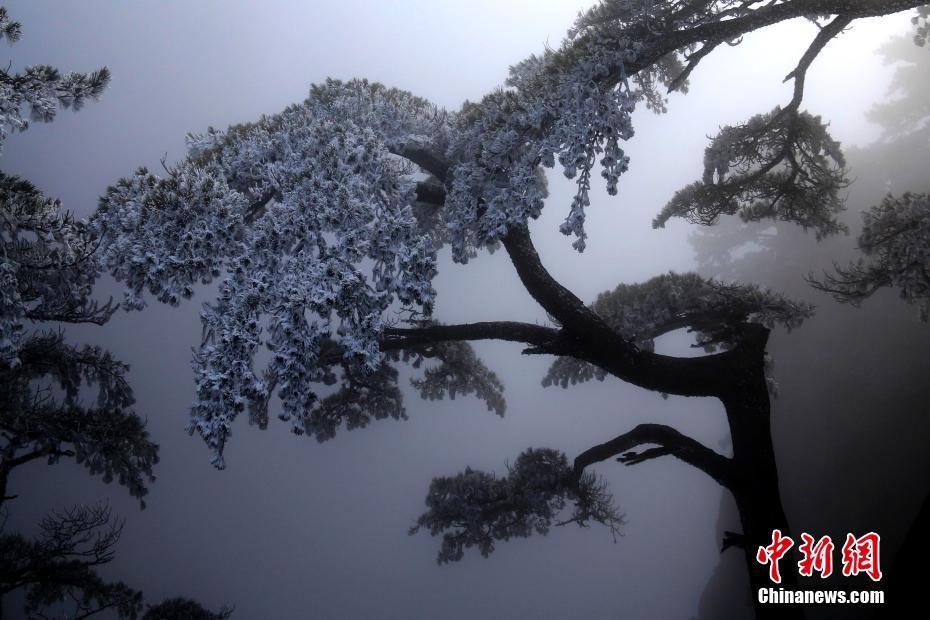 黄山雨后初霁雾凇美景