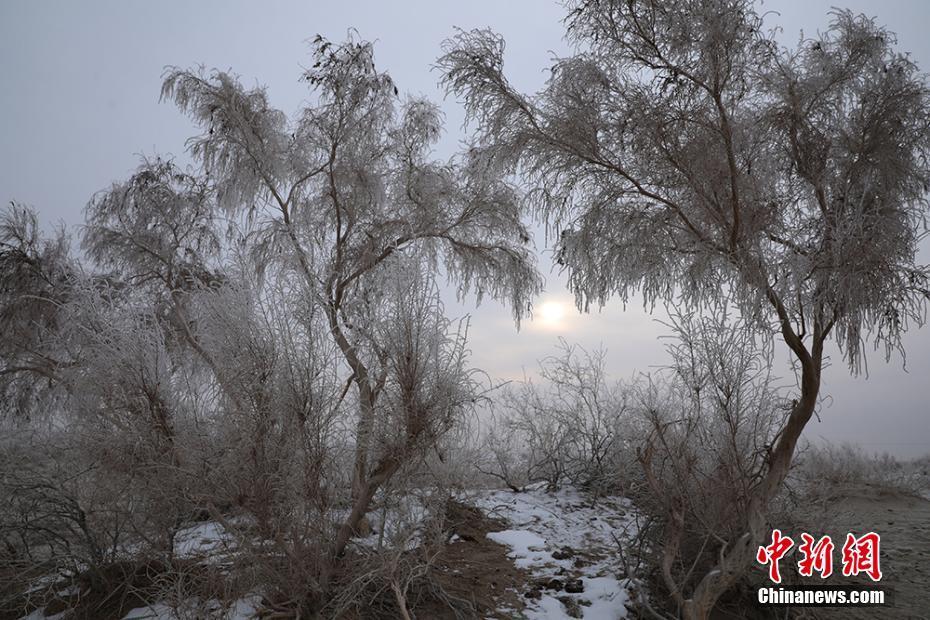 沙漠边缘雾凇美景迷人