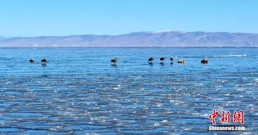 青海湖冰封玉砌 宛如仙境