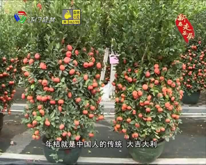 《新春走基層》鶴山:迎春花市年味濃  鮮花點綴美好生活