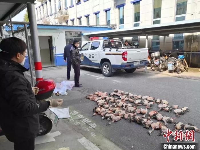 疫情严峻,这些人还在捕食野味,从重严惩!