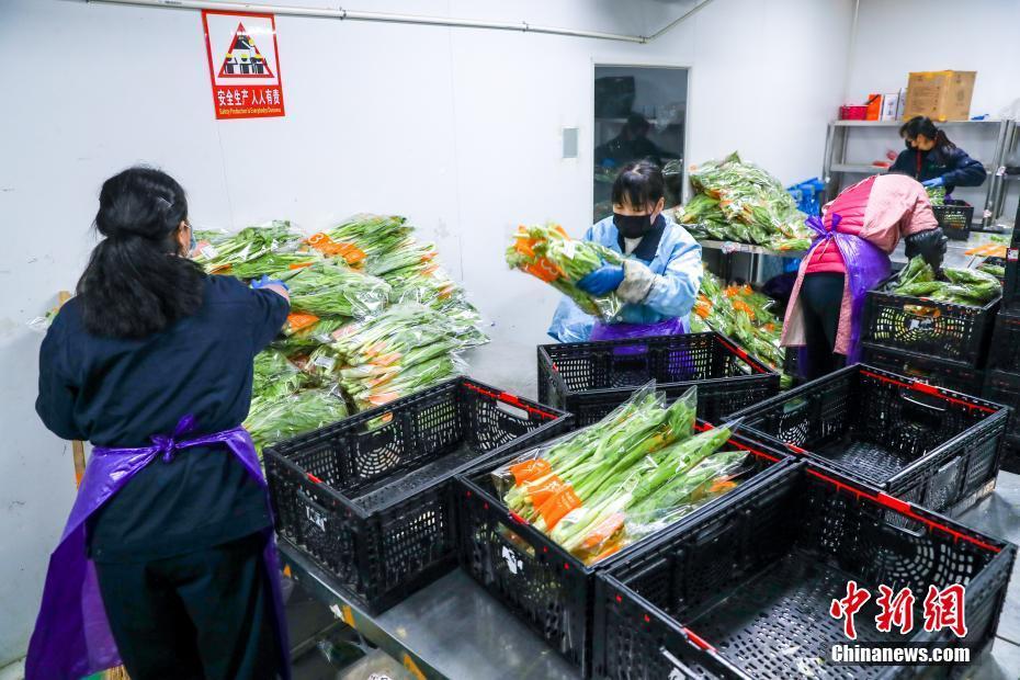 武漢全力保障蔬菜供應