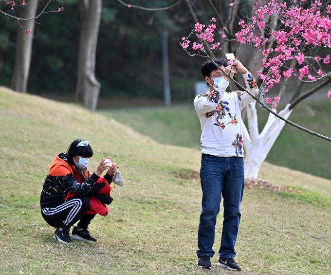 市民戴口罩观赏樱花