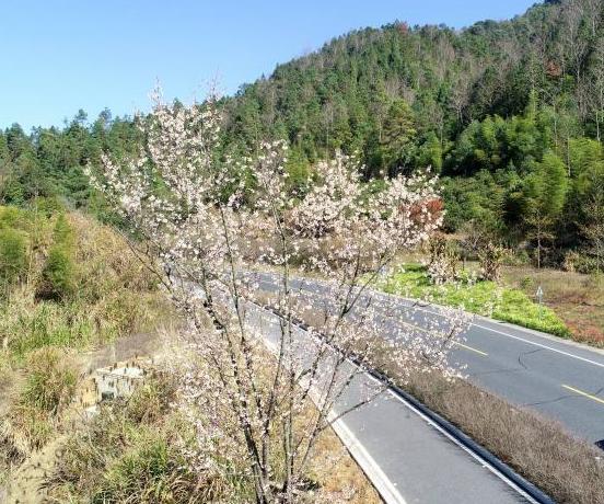 千岛湖花开正盛春渐浓
