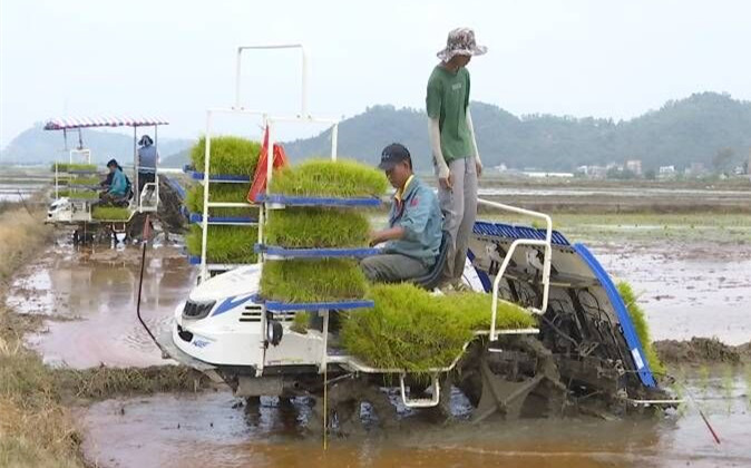 江门不误农时迅速开展春耕春种生产