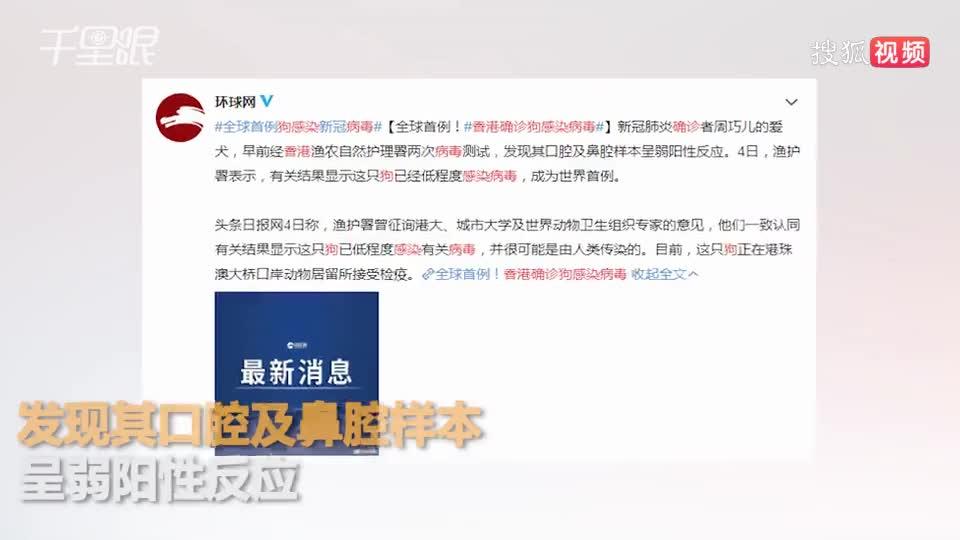 香港确诊狗感染病毒:系确诊患者的爱犬